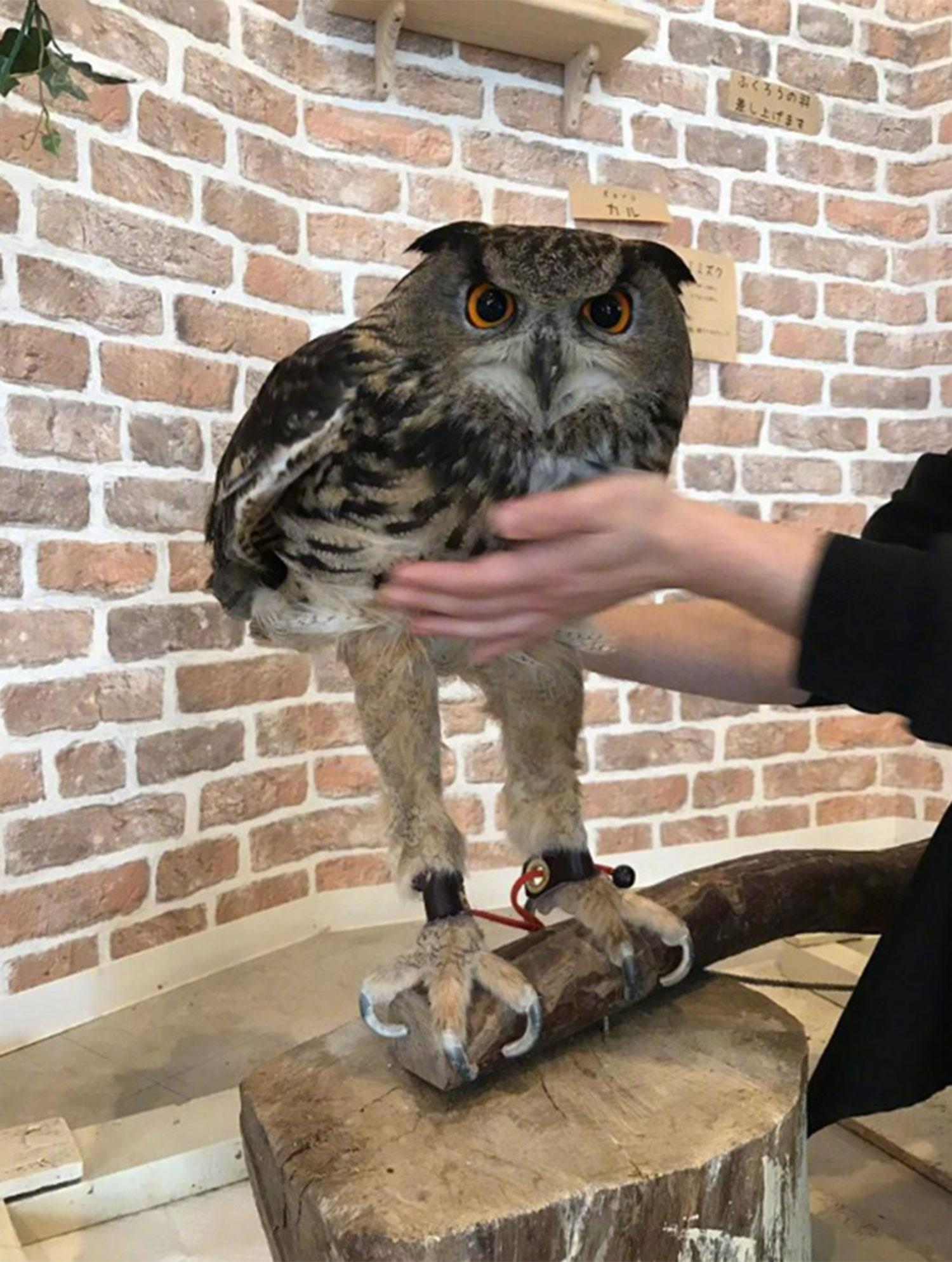 Owl Legs : Owl's, Freaking, People, Out...but, Turns