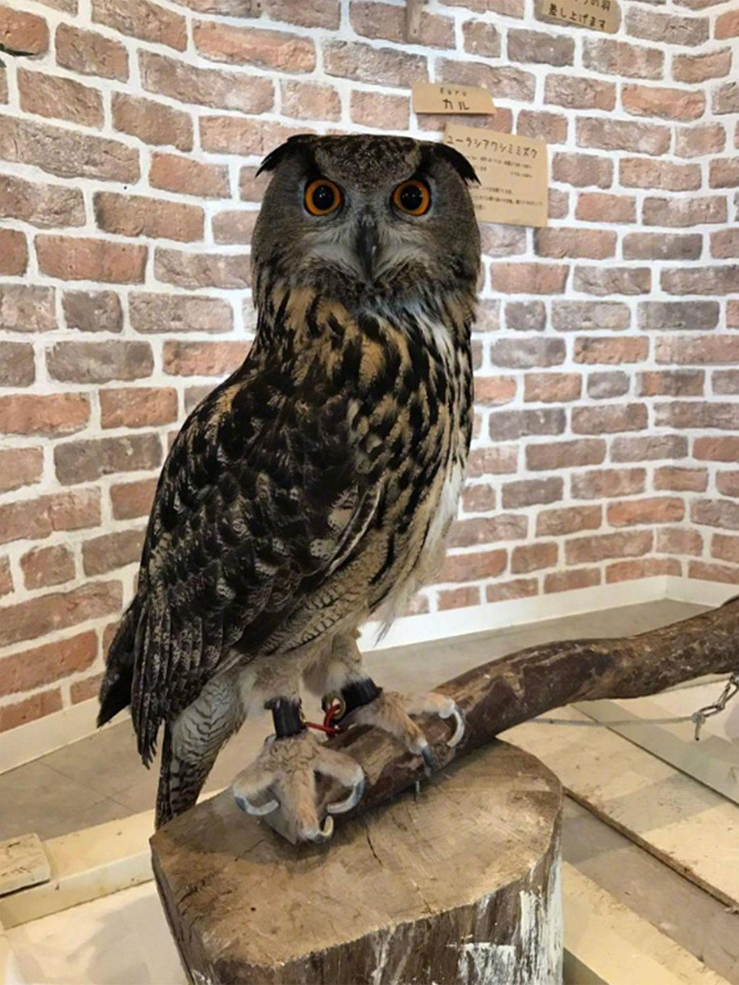 Do Owls Really Have Long Legs : really, Owl's, Freaking, People, Out...but, Turns