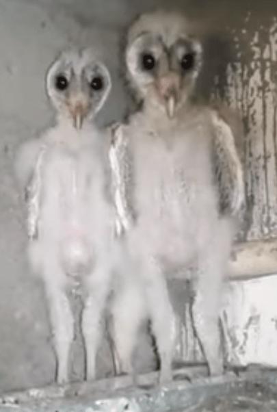 Creepy Baby Owls : creepy, Aliens
