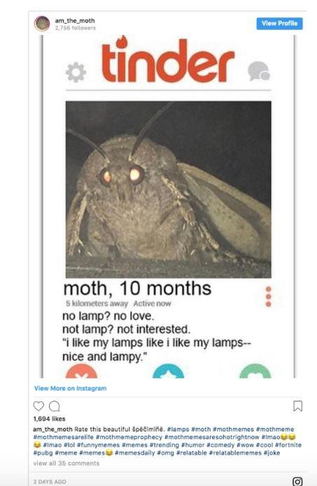 Moth Meme Original : original, Hundreds, Memes, Flooded, Internet,, Sparked, Creepy