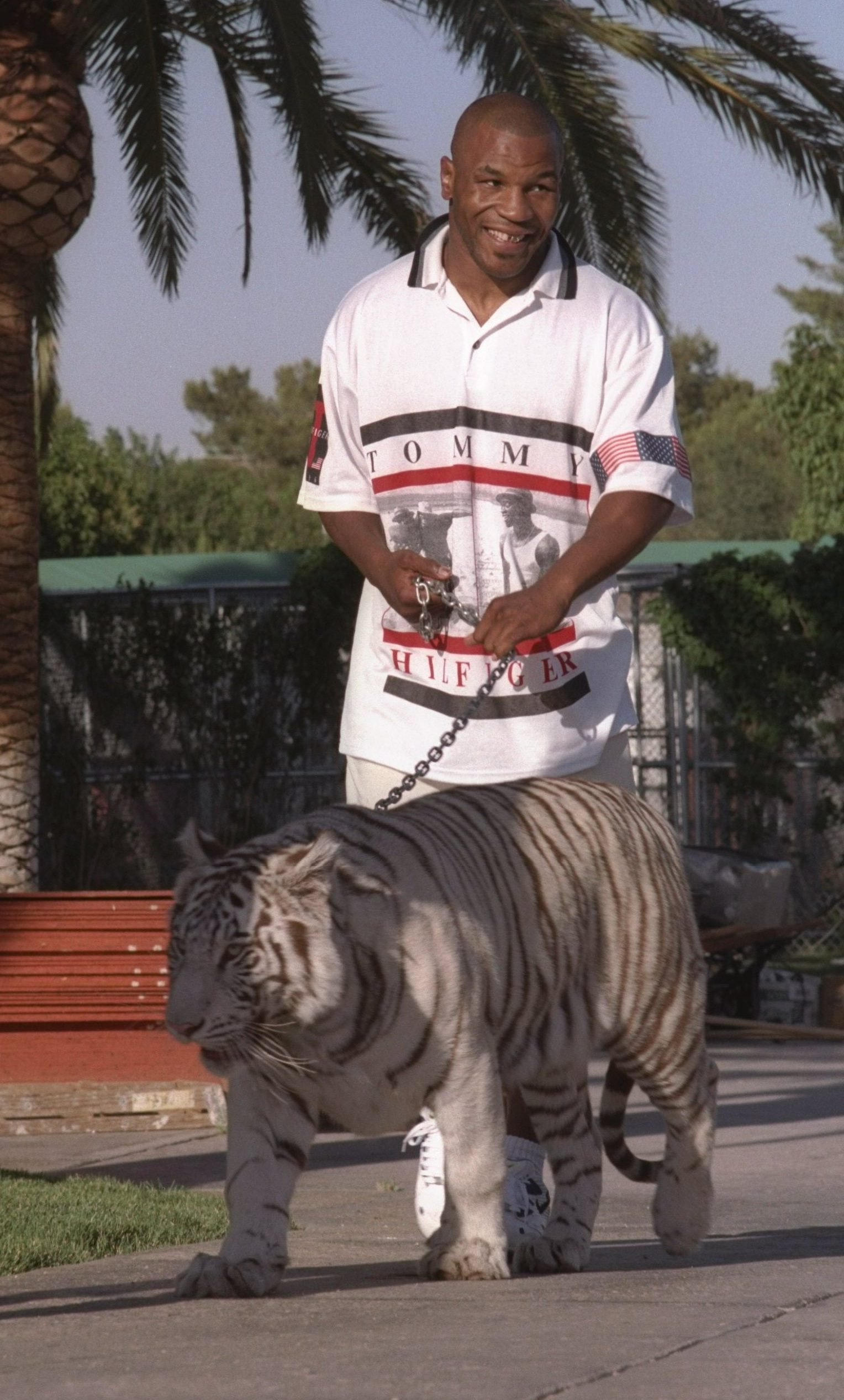Hold A Tiger : tiger, Tyson, Claims, Bengal, Tiger, Kenya, After, Years, 'ripped, Somebody's