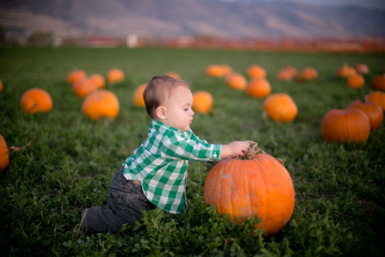 pumpkin-patch-4