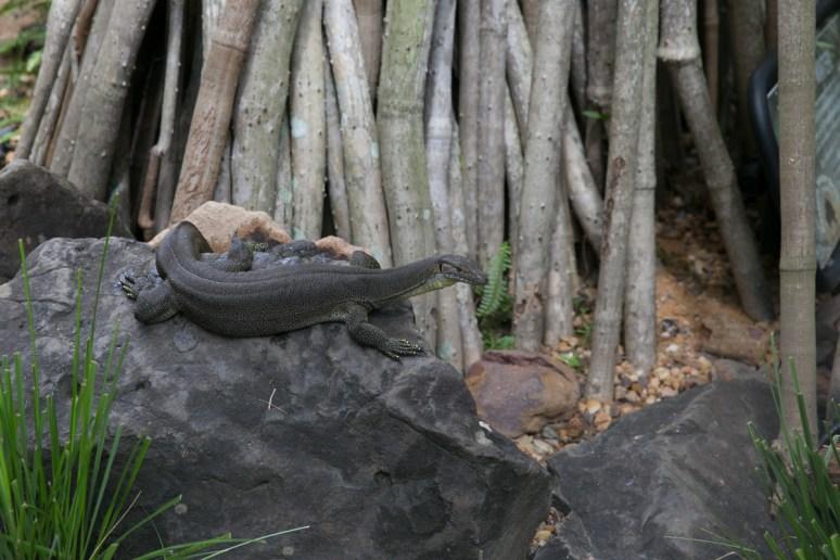 Australia Zoo-3