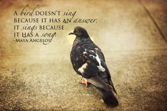 nice-birds-quotes-photos-for-tumblr-4-10daf325