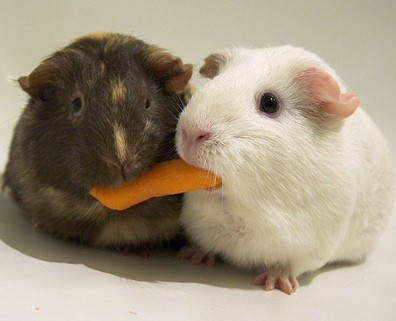 hamsters-1308934408