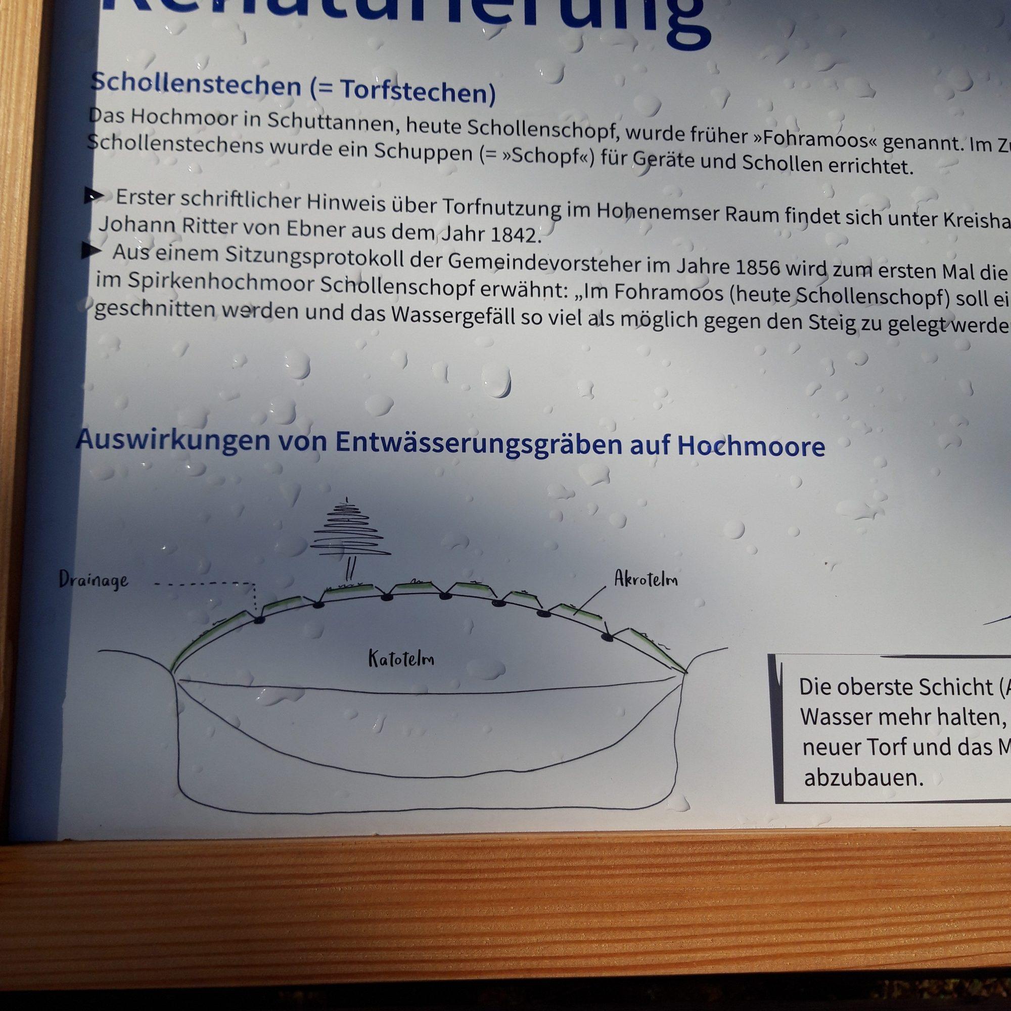 Hochmoor Schollaschopf Hohenems Schuttanen