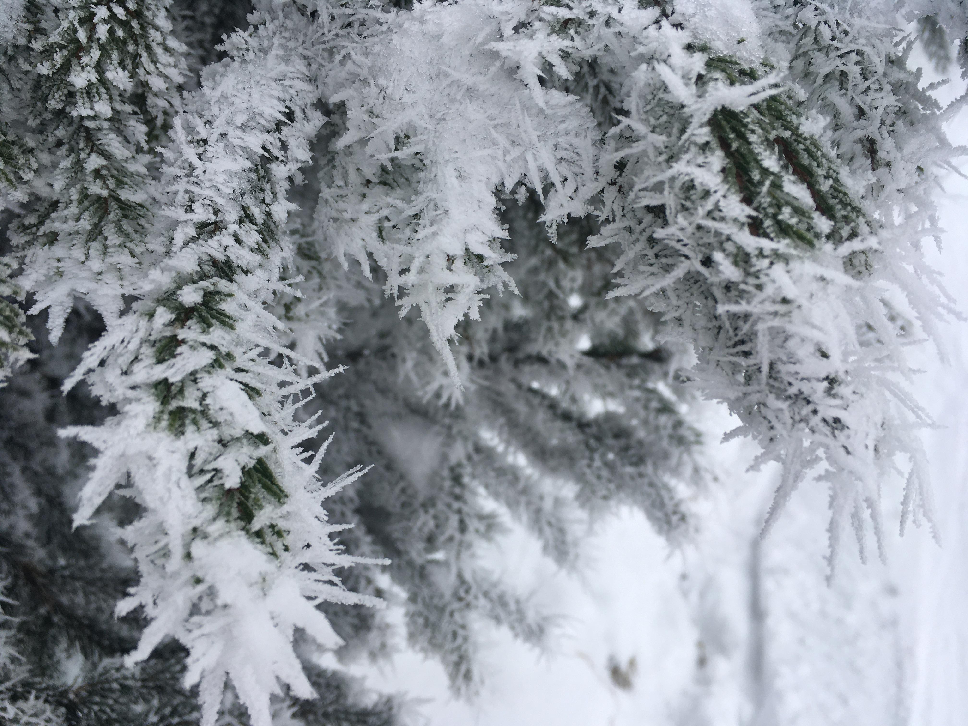 winterwanderweg naturbild