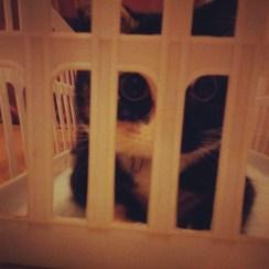 Laundry basket jail