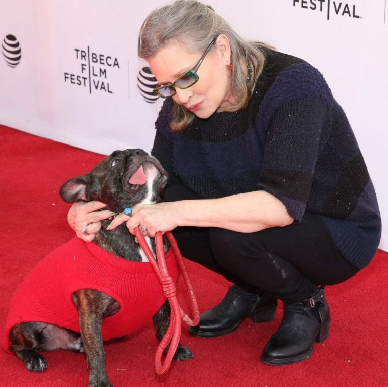 Carrie Fisher's Beloved Dog Gary by Her Side at Hospital After Heart Attack