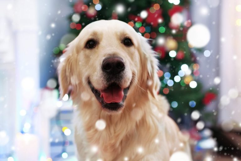 Pet Talk: Safe Holiday Snacking for your Pet
