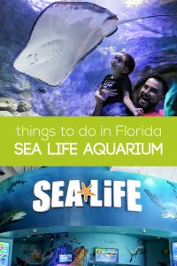 sea life aquarium, i drive 360, international drive, i-drive 360, florida i drive tickets, i drive 360 tickets, orlando i-drive 360, International Drive Resort Area, international drive Orlando, international drive tickets, orlando aquarium, orlando attractions, things to do in orlando, top attractions orlando, things to do with kids in orlando, florida tourist attraction, things to do in florida