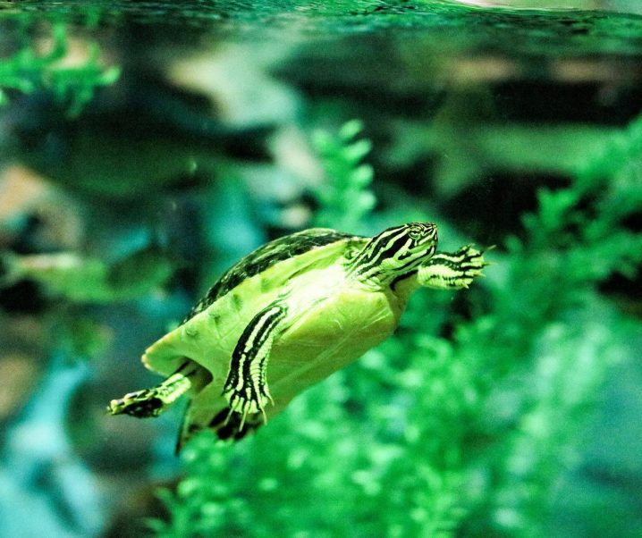 Things to Do in Florida {Series} – SEA LIFE Aquarium