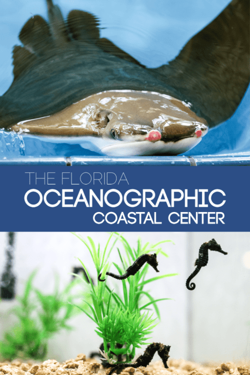 If you and your family love to learn about sea life, then you'll want to check out The Florida Oceanographic Coastal Center in Hutchinson Island, FL.