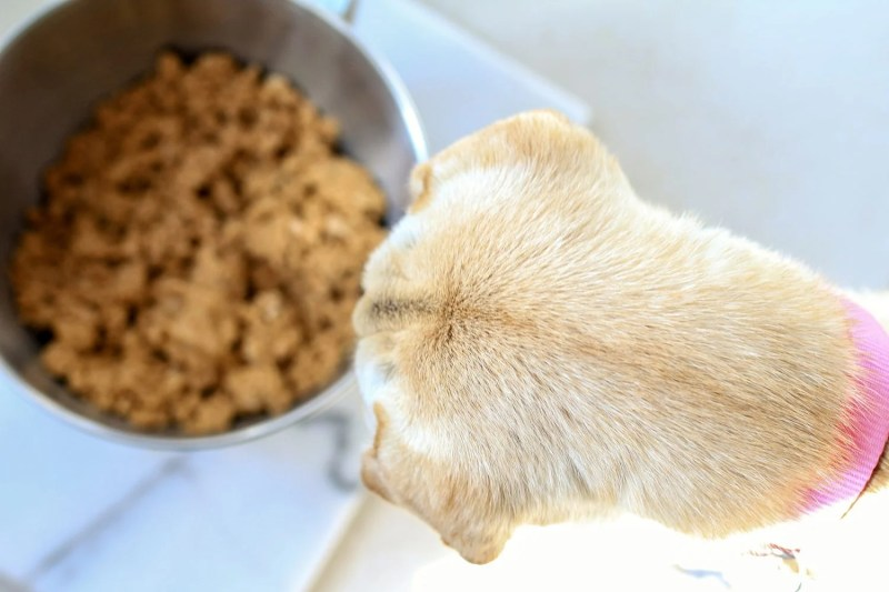 dog treat recipe, homemade dog treats, peanut butter dog treats, peanut butter and pumpkin dog treats, pumpkin dog treats, healthy dog treats, all natural dog treats, puppy, dog, Sharpei, Shar Pei, rescue dog, rescue puppy, getting a dog, mom blog, mom blogger, mommy blog, mommy blogger, 2019, family blog, parenting blog, the super mom life, thesupermomlife, parenting blogger, family blogger