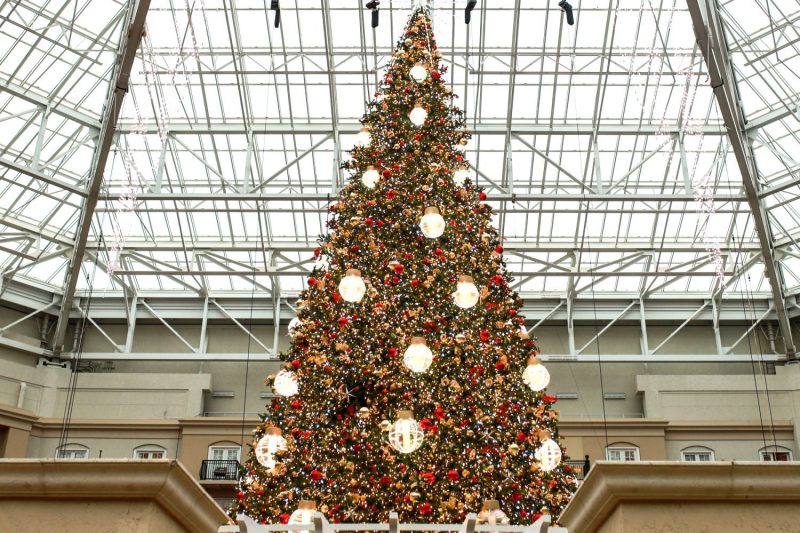 Christmas tree inside the atrium at Gaylord Palms