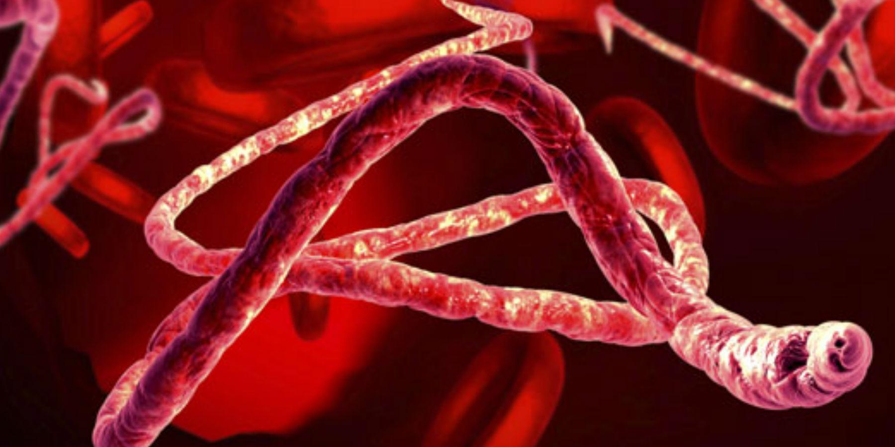 Ebola Outbreak in DRC