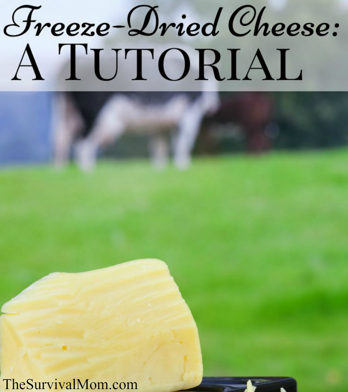 freeze dried cheese