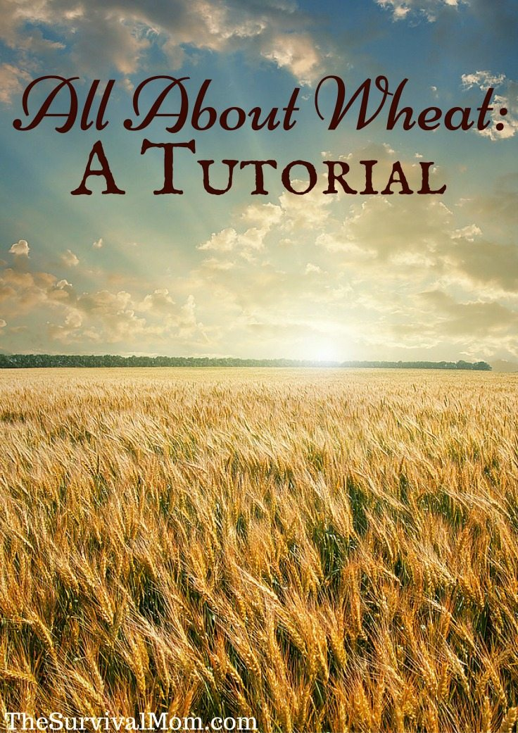 All About Wheat: A Tutorial via The Survival Mom