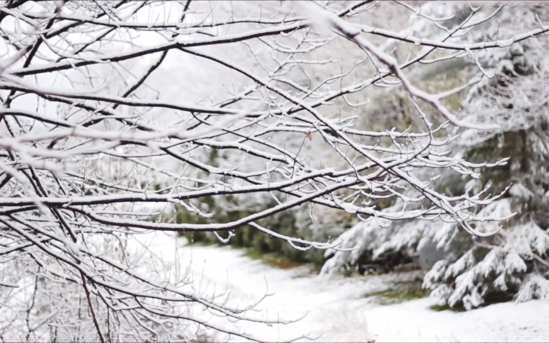 Retour dans la neige