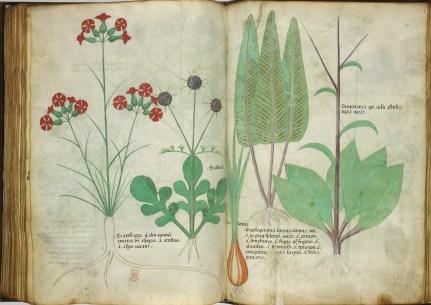 Manuscrit Sloane 4016 (1)