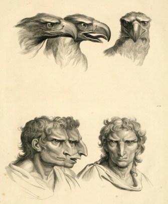 Dissertation sur un traité de Charles Le Brun, concernant le rapport de la physionomie humaine avec celle des animaux - rapport de la figure humaine avec celle de l'aigle
