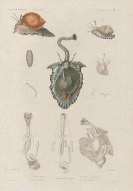 Voyage de découvertes de l'Astrolabe, exécuté par ordre du roi, pendant les années 1826-1827-1828-1829, sous le commandement de M. J. Dumont d'Urville - Page 089