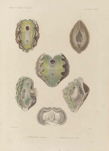Voyage de découvertes de l'Astrolabe, exécuté par ordre du roi, pendant les années 1826-1827-1828-1829, sous le commandement de M. J. Dumont d'Urville - Page 171