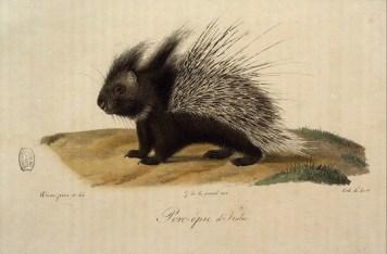 Histoire naturelle des mammifères, Wermer, Maréchal, Huet, C. de Lasteyrie, Etienne Geoffroy Saint-Hilaire, Frédéric Cuvier - 6