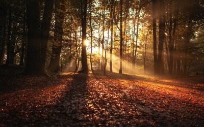 Couleurs de l'automne intérieur. Un automne avec James Lee Burke (et avec les autres)