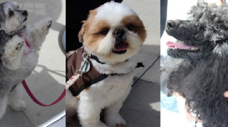 Canines visit UWT to help students destress