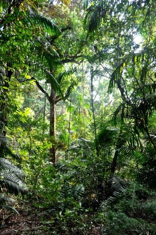 Wandering through the Parque Natural Metropolitano