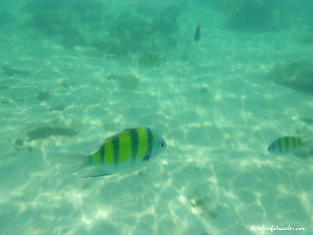 Snorkeling In Krabi