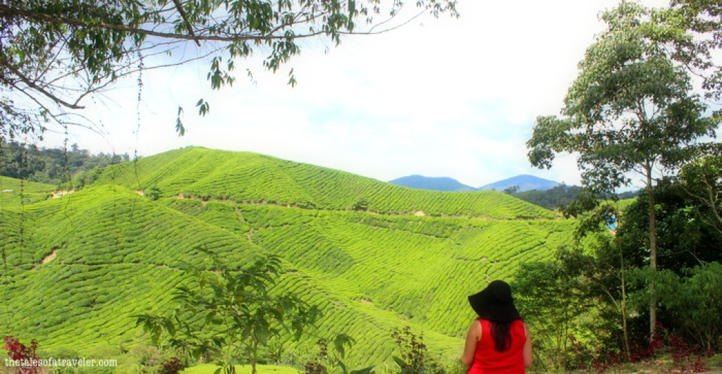 5 Things to Do In Cameron Highland 2