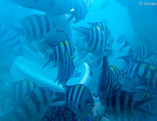 Seawalking in Bali with Seawalker Sanur
