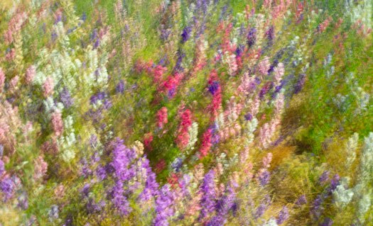 Impressionist Flower Photography - Dancing Delphiniums after Monet by Charlie Budd The Tall Photographer