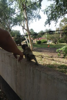 a hand reaching out to a monkey