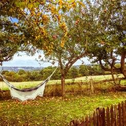 hammock between trees in beautiful nature