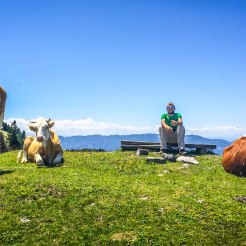 a man sitting on a wooden log next to three cows