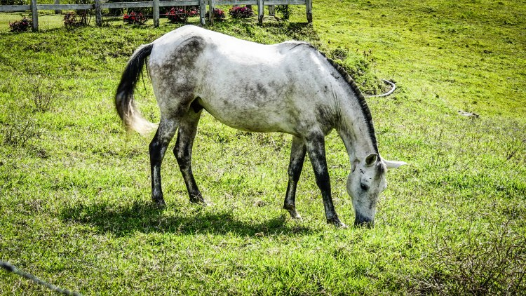 a white horse on the meadow