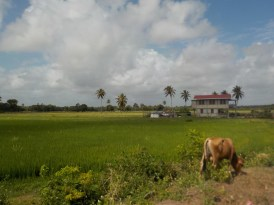 A field in Guyana