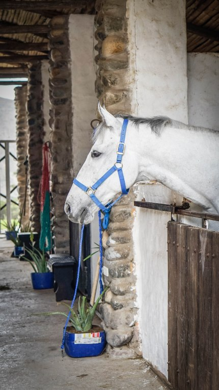 a white horse in a stable