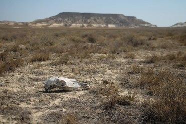 skull in desert in Kazakhstan