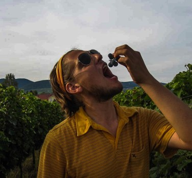 Man with sunglasses eating grapes in vineyards / Valentin Nerding