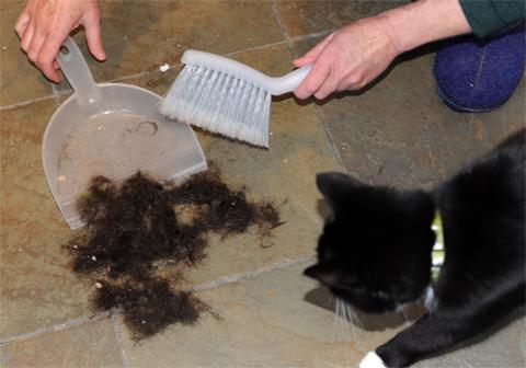 Hair_Cat
