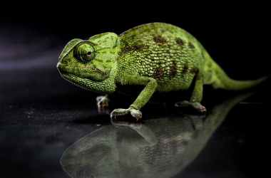 photo of chameleon near the water