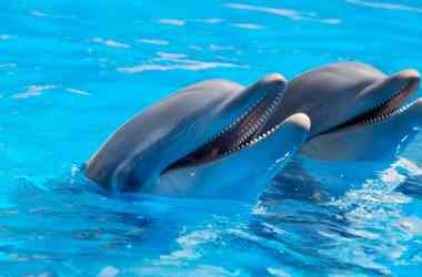 adorable dolphins on surface of water