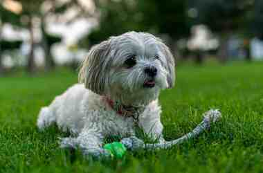 animal dog pet cute