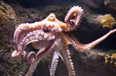 Arm of the Octopus