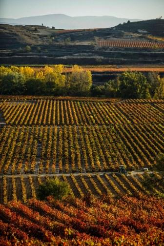 Rioja Alta, San Asensio, San Vicente