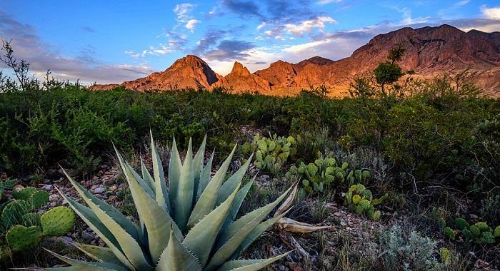 Mezcal - Mexico's Answer to Single Malt Whiskey 2